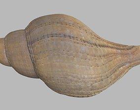3D model Single seashell photoscan 04 photgrammetry