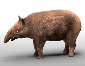 Tapir Hairs Rigged 3D asset