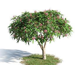3D model Plumeria rubra 48 am154