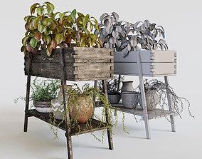 pots Terrace plants 2 3D model