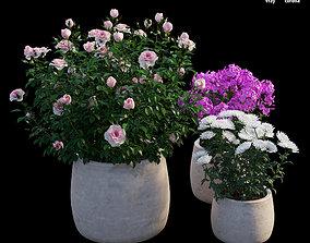 3D Grow Flowers in pots