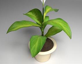 3D Flower spathiphyllum