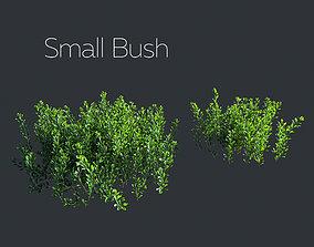 3D Small northern bush