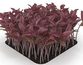 3D model Red amaranth rect