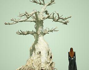 3D model Dead Bonsai Tree 7