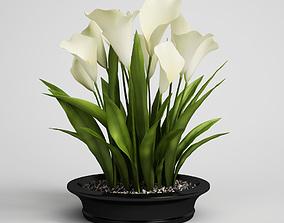 palm CGAxis flower 3D