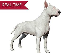 Bull Terrier Real-Time 3D asset