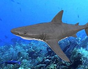 Great White Shark 3D model realtime