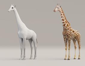 3D asset animated Rigged Giraffe