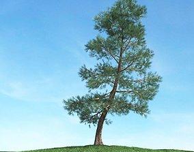 3D Slanted Pine Tree In Field