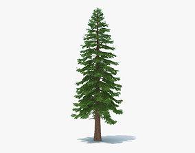 Redwood Tree 3D