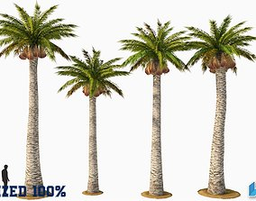 Palm Washingtonia Tree Optimized 3D asset