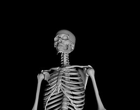 3D Male Skeleton Model - Human Skeleton 3D Model animated