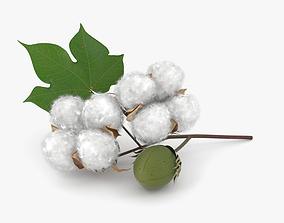 3D model Cotton