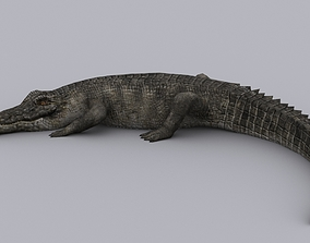 CROCODILE GAME READY ANIMATED MODEL 3D asset
