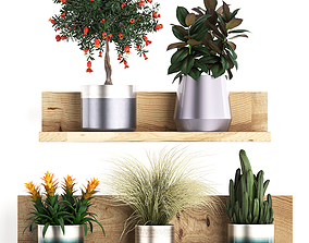 3D model Collection of Exotic Plants 409