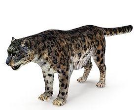3D model Snow Leopard