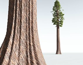 EVERYPlant Coastal Redwood 09 --12 Models-- 3D
