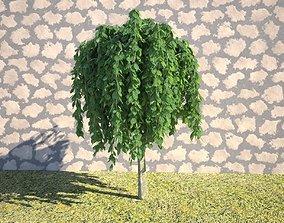 Realistic Tree Salix pendula 3D landscape