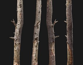 Dead tree 3d scan
