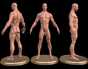 Man Anatomy Ecorche 3D print model