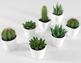 Succulent and Cactus in pot 3D asset