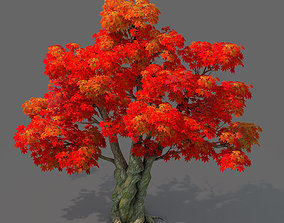 Forest - Maple Tree 15 3D model