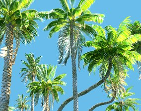 3D Animated Palm Trees