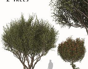 3D model Set of Arbutus unedo or Strawberry Tree - 2 Trees