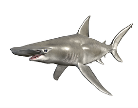 Hammerhead Shark 3D asset animated