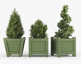 Buxus green pot nature 3D