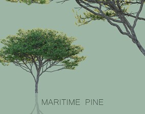 3D model Maritime Pine Trees