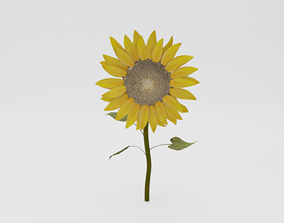 Sunflower 3D model low-poly