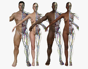 3D Full Body Anatomy Collection