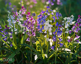 realtime PBR 3D flower collection vol05 Bluebell