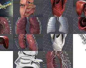 Respiratory System 3D