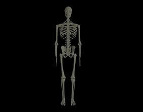 Rigged Human Skeleton 3D