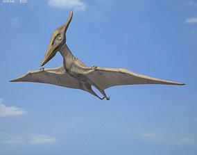 Pteranodon Pteranodon Longiceps 3D model