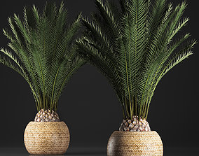 3D model Decorative palm tree in a pot Date palm