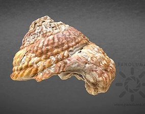 realtime Seashell 3D Scan