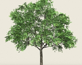 3D asset Game Ready Forest Tree 17