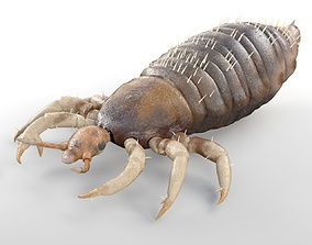 Louse Rigged 3D model