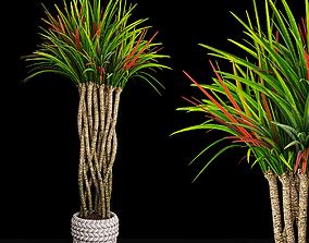 Plant 12 3D