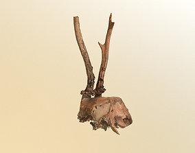 Scanned photorealistic broken roe dear skull 3D model 1