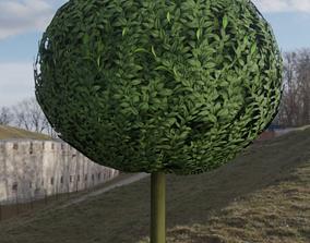3D model Box Tree 1 m