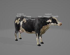 3D model VR / AR ready Cow Organ