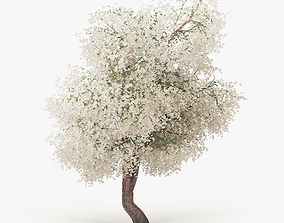 Flowering Apple Tree 3D