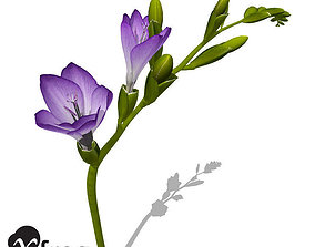 XfrogPlants Freesia 3D model
