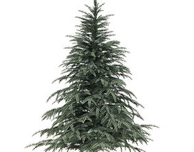 3D model Spruce Tree 2point3m