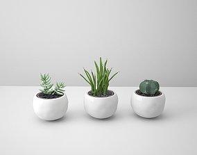 3D White Potted Cactus Set